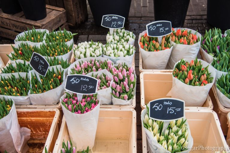 Amsterdam - tulips sale