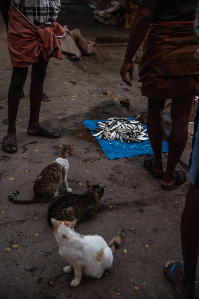 fish-auction-2-cats